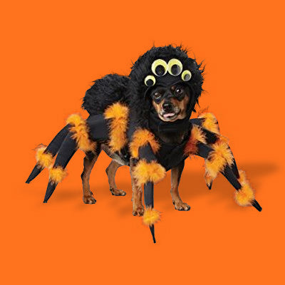 Dress Up Your Dog