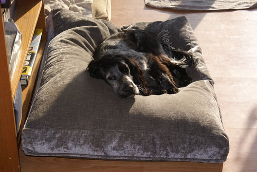 Cocker Spaniel dog bed