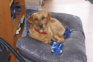 Red Fox Lab dog bed