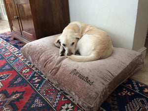 Golden Labrador dog bed