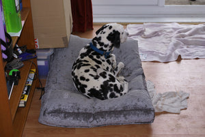 Dalmation dog bed