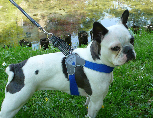 Cortina Blue Harness by Huggle Hound