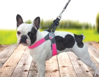 Cortina Pink Harness by Huggle Hound