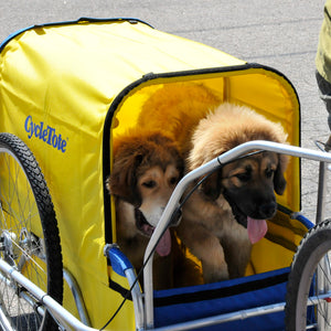 Rocky Mountain Dogs Ride in CycleTote Trailers