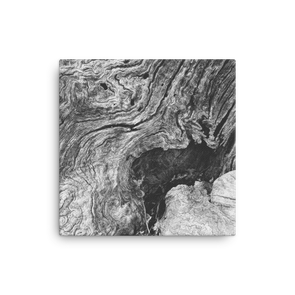 Tree Stump Grain (canvas artwork)