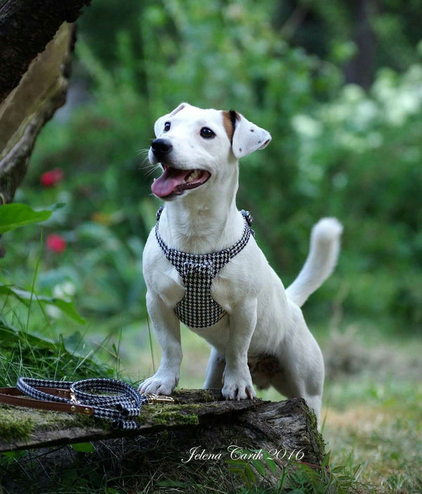 Pepita Dog Harness - BARCELONADOGS