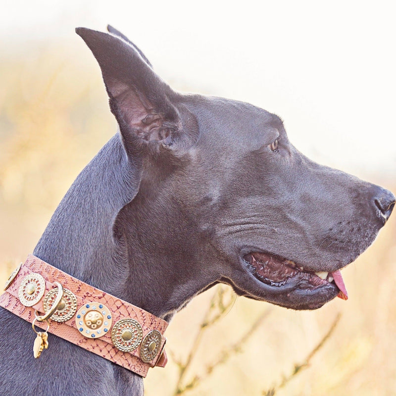 Simply Casablanca XXL Dog Collar - BARCELONADOGS