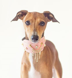 Cascade Sighthound Collar - BARCELONADOGS