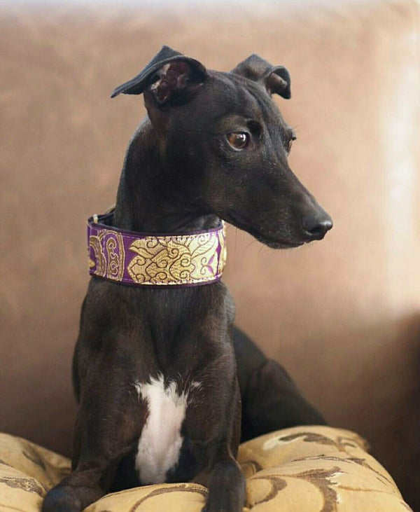 Italian Greyhound Martingale - BARCELONADOGS