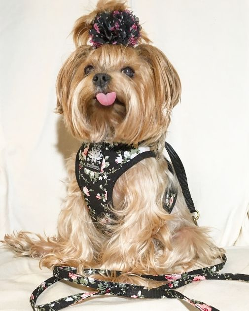 Black Vintage Rose Harness with Leash