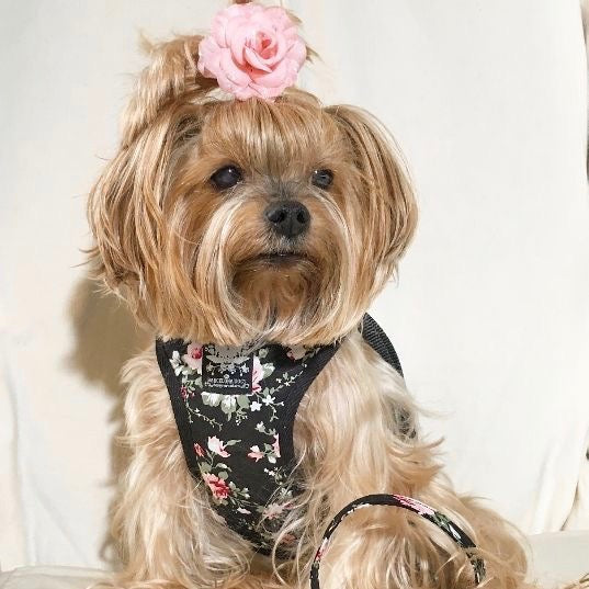 Black Vintage Rose Harness with Leash - BARCELONADOGS