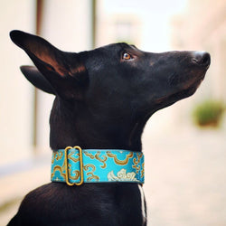 Extra Wide Martingale (28-50 cm) - BARCELONADOGS