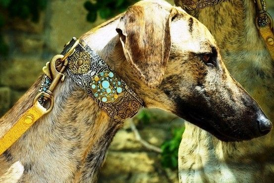Persian Paisley Dog Collar - BARCELONADOGS