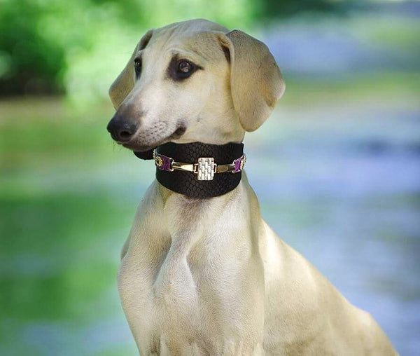 Saigon Sighthound Collar - BARCELONADOGS