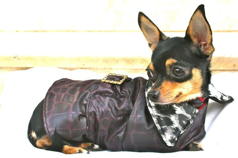 Rainy Coat in Plum for Toy Breeds