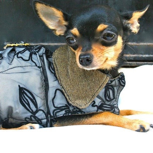 Lace Dog Coat - BARCELONADOGS