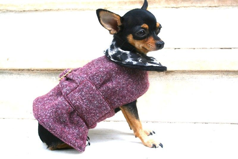 Plum Dog Coat