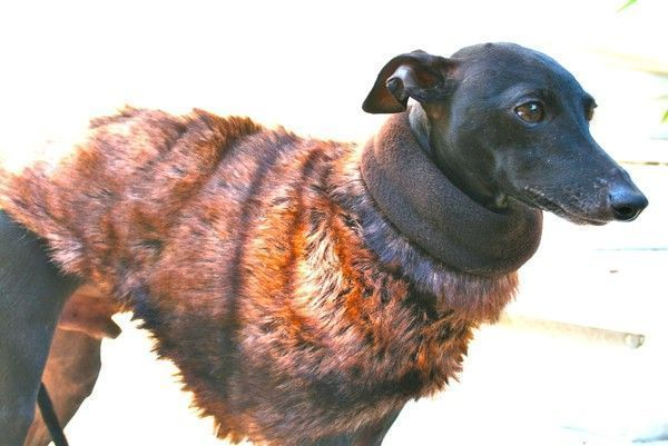 Winter Coat Piccolo Zorro