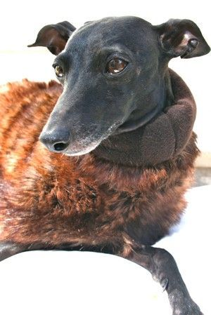 Winter Coat Piccolo Zorro - BARCELONADOGS