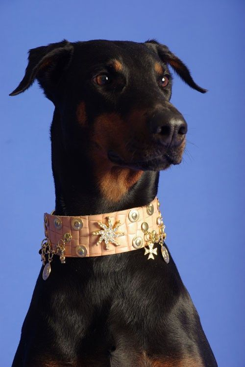 Russia Dog Collar