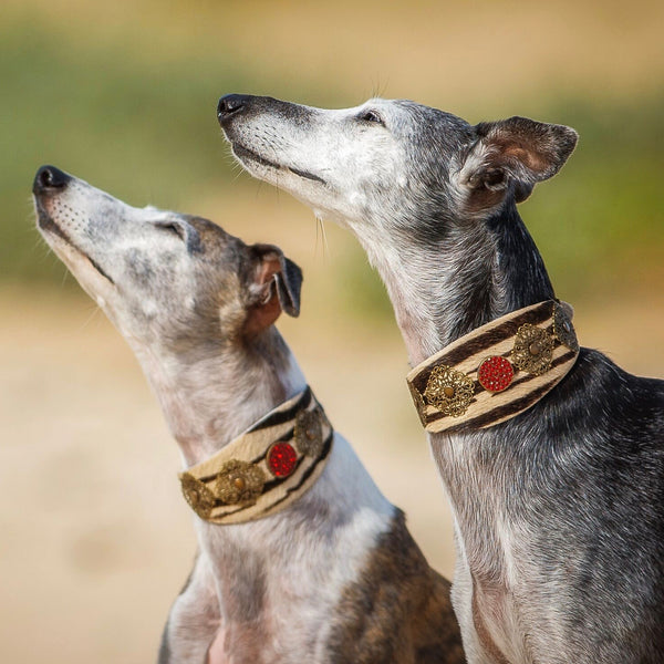 Zebra Filigree Sighthound Collar