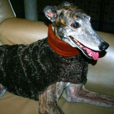 Chocolate Greyhound Coat - BARCELONADOGS