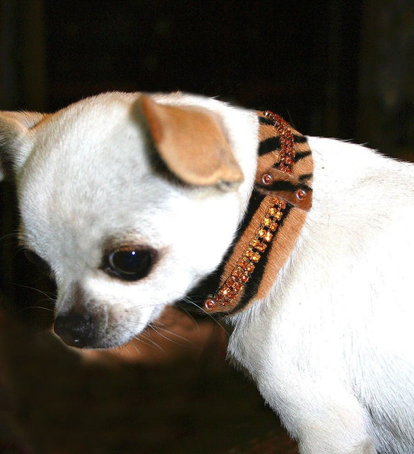 Serendipity Dog Collar