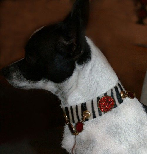 Zebra Safari Dog Collar - BARCELONADOGS