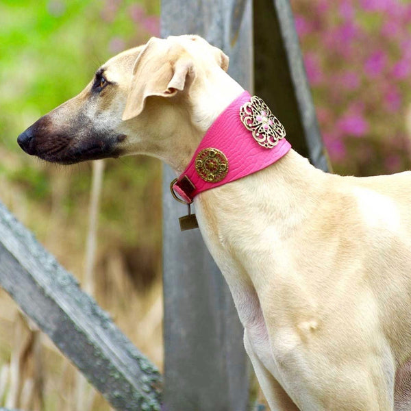 Flower Power Sighthound Collar - BARCELONADOGS