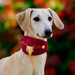 Bizarre Sighthound Collar - BARCELONADOGS
