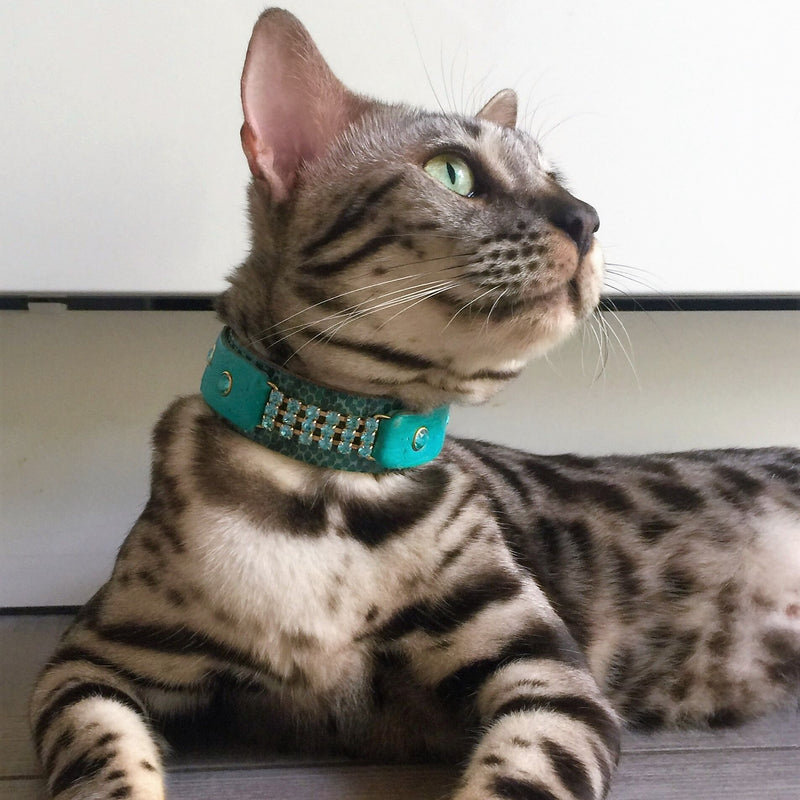 Elle Cat Collar - BARCELONADOGS