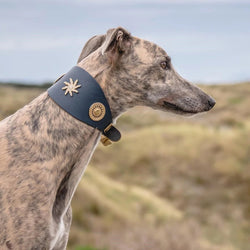 Star Sighthound Collar - BARCELONADOGS