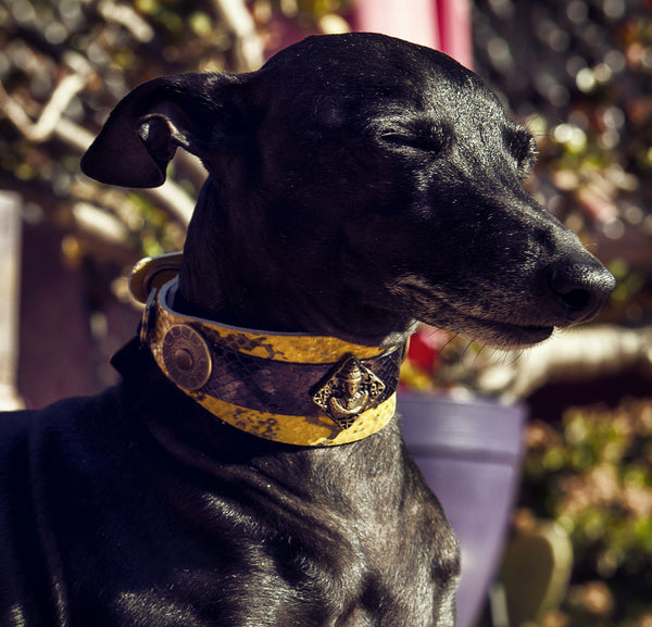 Buddha Salvaje Sighthound Collar - BARCELONADOGS