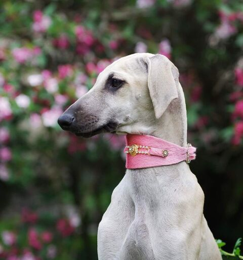 Bacall Dog Collar - BARCELONADOGS