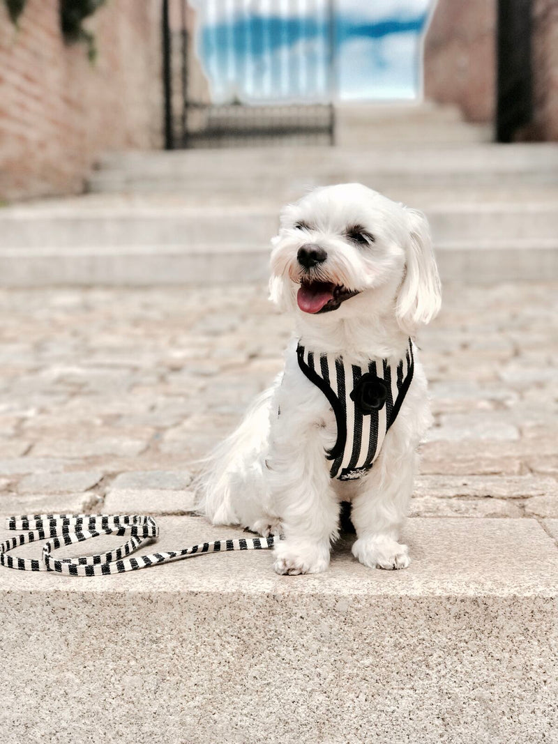 Striped Black & White Harness with Leash - BARCELONADOGS