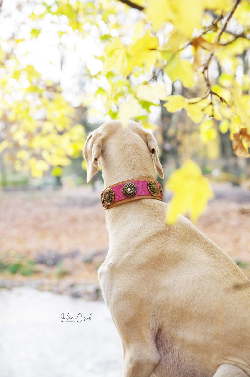 Mother Of Dragons Dog Collar - BARCELONADOGS