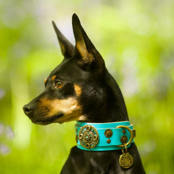 Basic Crystallized Dog Collar - BARCELONADOGS