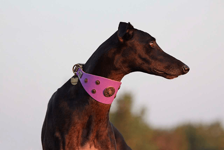 Basic Crystallized Sighthound Collar - BARCELONADOGS
