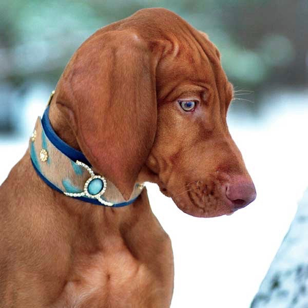 Ivy Blue Dog Collar - BARCELONADOGS