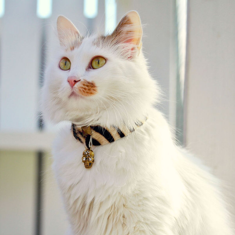 Pirate Bay Cat Collar - BARCELONADOGS