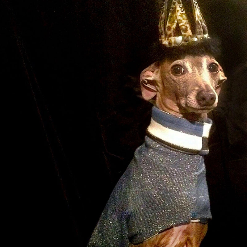 Glitterish miniature sighthound coat