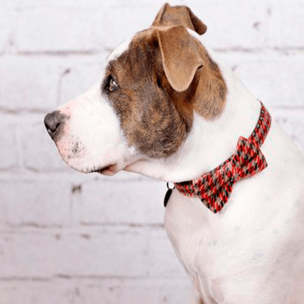 Burberrish Bowtie Dog Collar