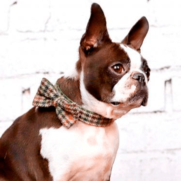 Burberrish Bowtie Dog Collar - BARCELONADOGS