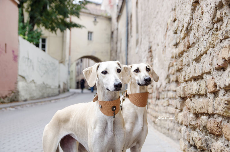 Shaqat Sighthound Collar - BARCELONADOGS