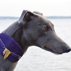 Bizarre Italian Greyhound Collar - BARCELONADOGS
