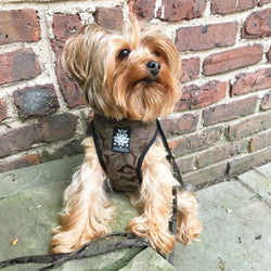 Military Velvet Dog Harness with Leash - BARCELONADOGS