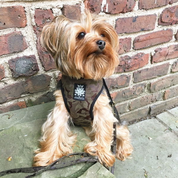 Military Velvet Dog Harness with Leash