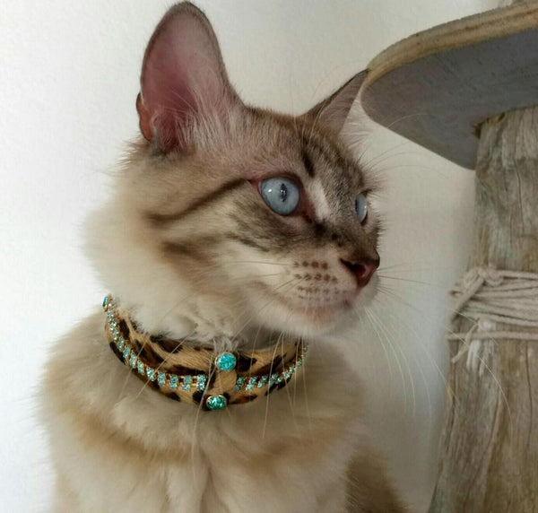 Serendipity Cat Collar - BARCELONADOGS