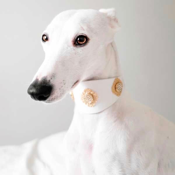 Filigree Crystal Sighthound Collar - BARCELONADOGS