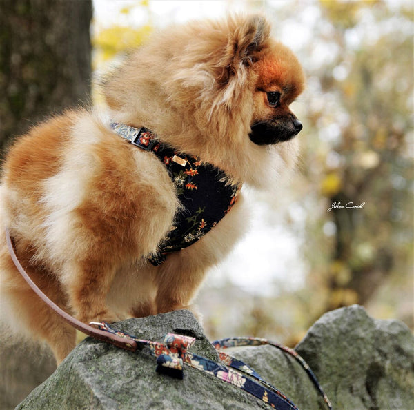 Tropical Navy Dog Harness - BARCELONADOGS